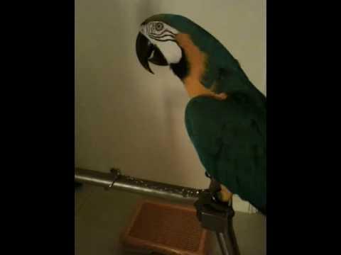Chicken or the Egg? (Dear Ryan)из YouTube · Длительность: 2 мин54 с