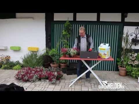 Blumenkästen für Herbst und Winter - gartenHELDEN