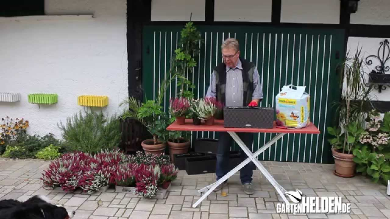 Blumenkasten Fur Herbst Und Winter Gartenhelden Youtube