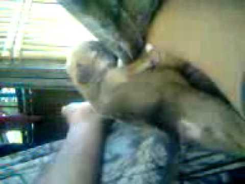 Video0107.3gp thumbnail