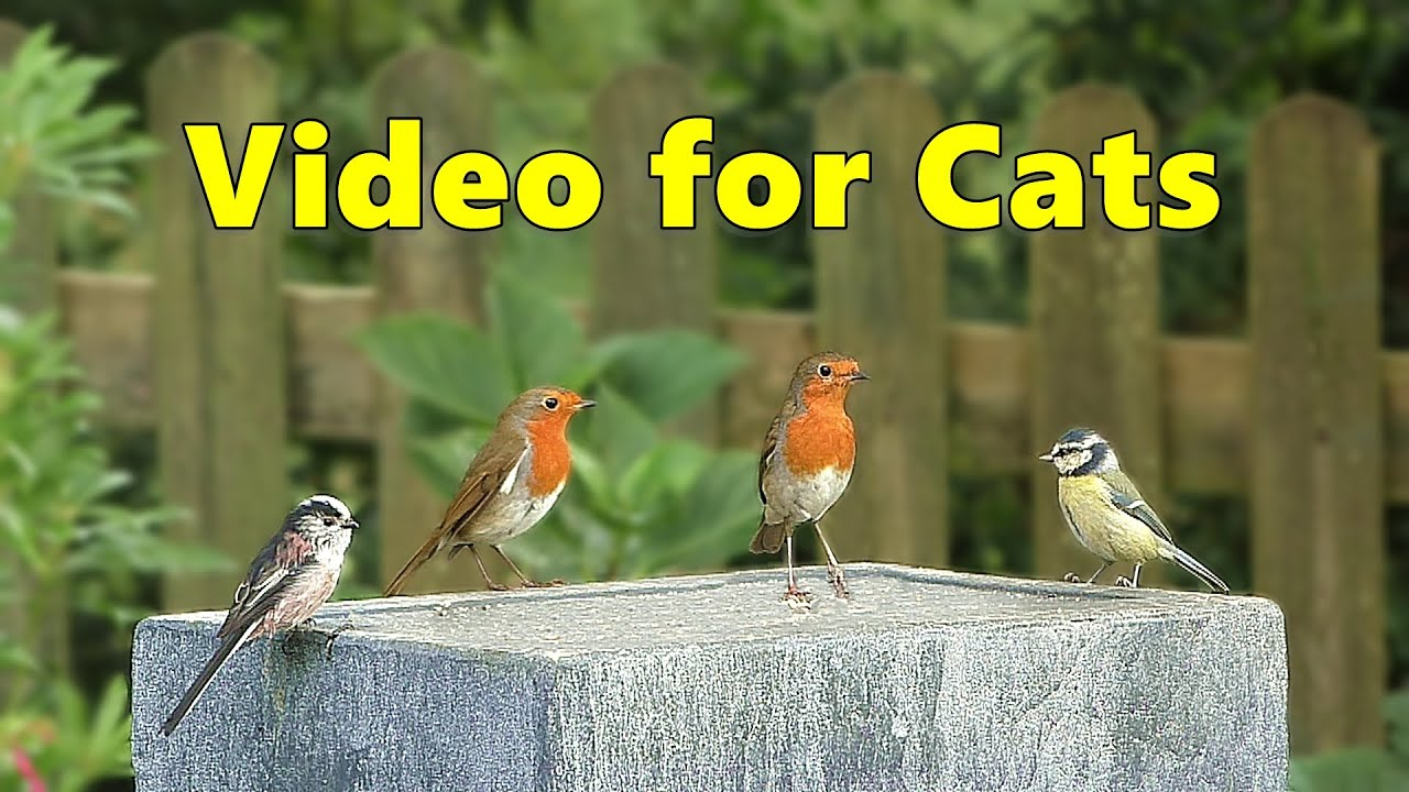 Videos for Cats to Watch - Garden Birds Delight ⭐ NEW