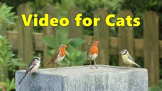 Videos for Cats to Watch  Garden Birds Delight ⭐ NEW