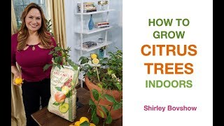 HOW TO GROW CITRUS TREES INDOORS, STEP BY STEP