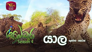Sobadhara - Sri Lanka Wildlife Documentary | 2020-06-26 | Yala - 3 (යාල -3) Thumbnail