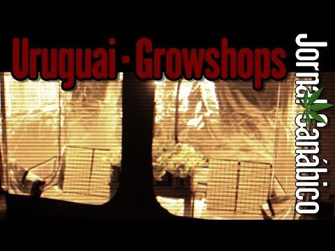 Growshop em Montevideo