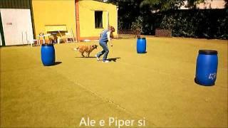 Video PRESENTAZIONE BARREL RACING DOG download MP3, 3GP, MP4, WEBM, AVI, FLV Agustus 2018