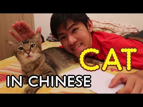 How to Say 猫 Cat in Chinese | Speed Mandarin Lesson