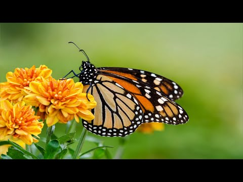 Relaxing Music for Stress Relief, Calming Music, Spa, Massage, Yoga, Sleep