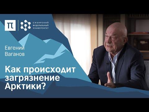 Экология Арктики — Евгений Ваганов / ПостНаука