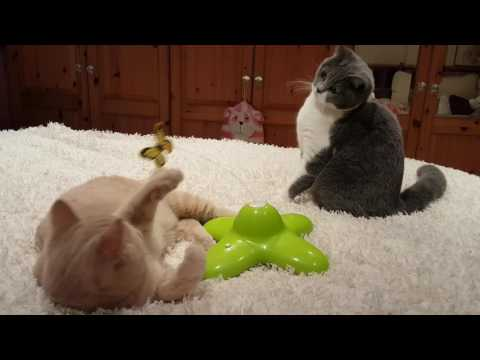 Funny ! Kittens playing with a butterfly.