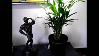 Mini grow light for 1 plant ...7 watt