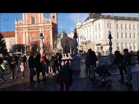 Alaskan Malamute visits Ljubljana's flea market and Triple Bridge
