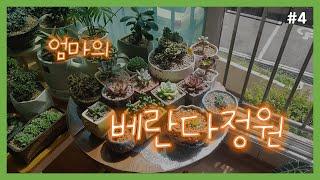 엄마의 베란다 정원!  #공기정화식물 #다육이 #suc…