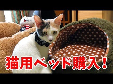 子猫のぽてとに猫用ベッドを買ってみたが…