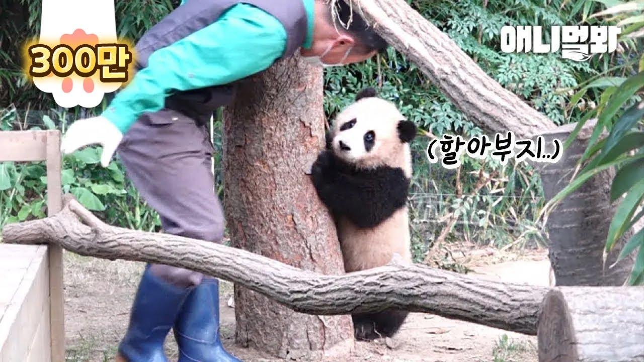 엄마 판다가 아기 판다를 사랑하는 특별한 방법ㅣSpecial Way Of How Mama Panda Loves Her Baby