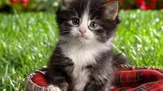 Самые красивые коты!