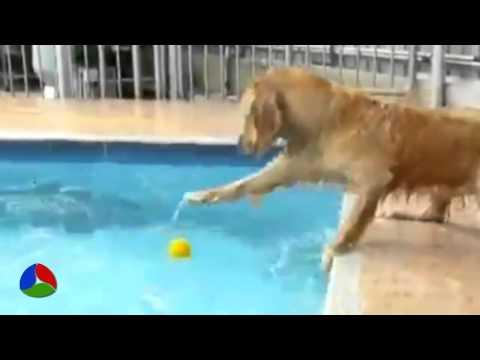Кошки против Собак — Смешное видео