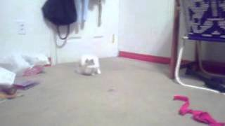 bunny flip!