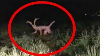 10 mythical creatures spotted in real life caught on camera