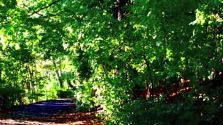 Александр Копанев - Осенний свет
