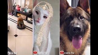 chó mèo hài hước dễ thương cute nhất thế giới #1 - tik tok, cats tv