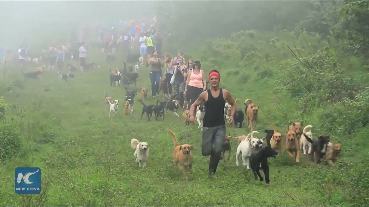 sanctuary takes care of 800 stray dogs for adoption in