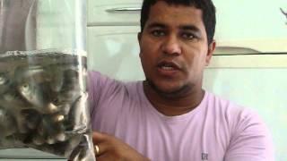 sistema anti enrosco com lambari 2