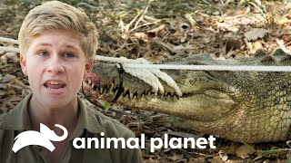¡Robert aprende a capturar un cocodrilo! | Los Irwin | Animal Planet