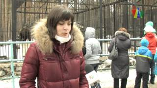 видео В Киевском Зоопарке мишки проснулись