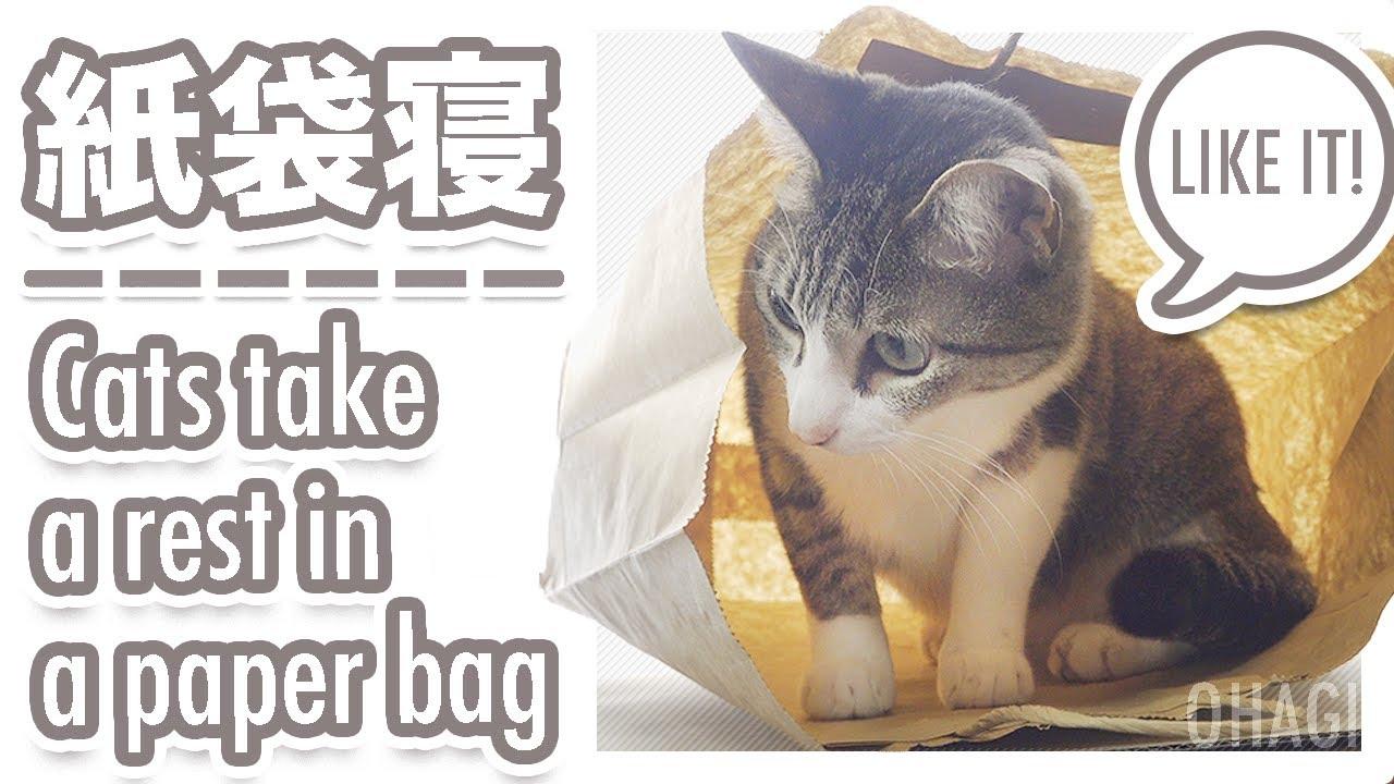 猫の紙袋寝