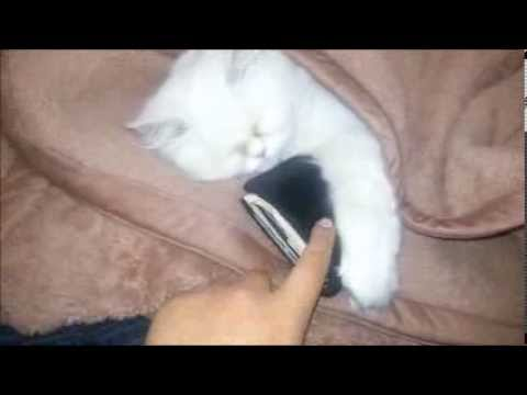 scumbag cat stole my wallet !