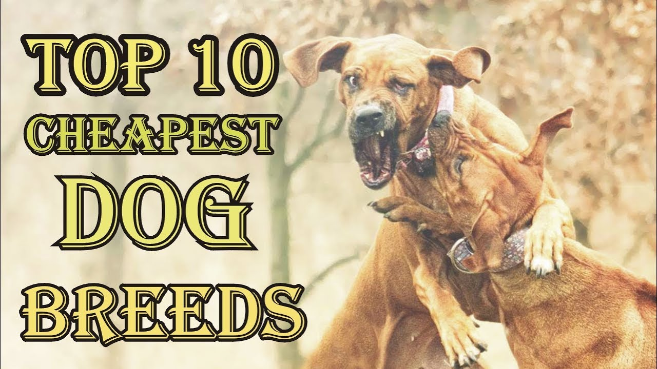 Top  Cheapest Dog Breeds