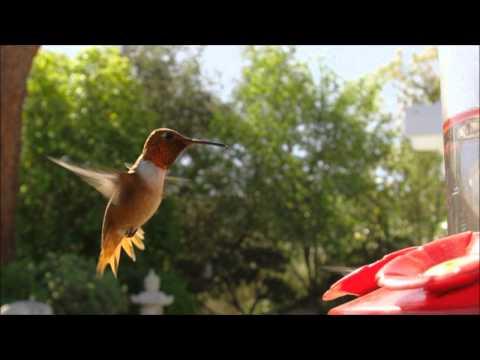 Snatam Kaur - By Thy Grace - Hummingbirds