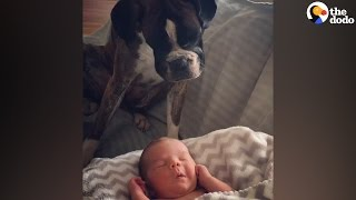 Dog Loves Her New Baby Brother | The Dodo