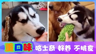宠物联萌 | 可爱狗狗🔴这哈士奇有点重口味……竟然吃大葱……😊Funny and Cute Baby Dog Videos Compilation(2018-5)