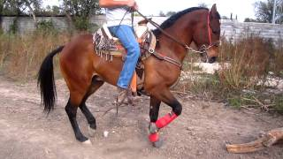 caballo bailador mezquital 1