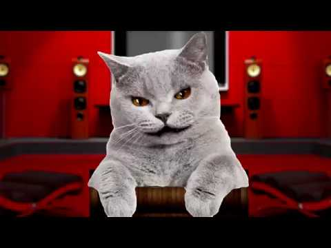 Video de gracioso de gatos para niños.Gato contando chiste corto