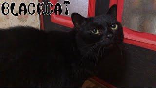 BLACK CAT / 黒猫