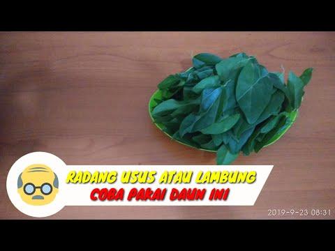 cara-membuat-ramuan-herbal-usus-dan-lambung