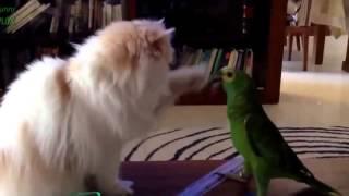 Попугайчики и кошечки! Самое смешное видео Приколы на улет!