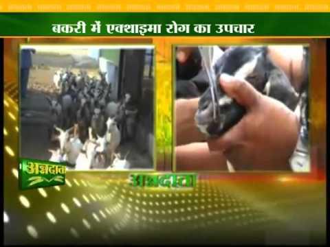 Treatment for goat disease ekthaima