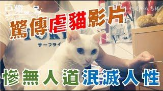【豆漿 - SoybeanMilk】虐貓實錄 驚傳有人將虐貓影片上傳