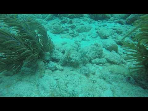 small Malabar Grouper