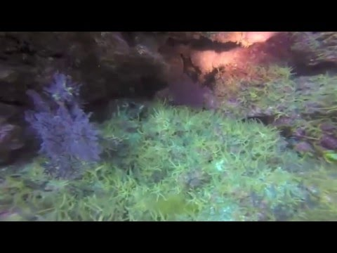 Aquanautics Dive: Anacapa Boys