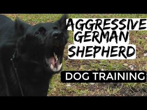 aggressive-german-shepherd-tries-to-attack-dog-trainer--how-to-train-aggressive-dog