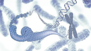 Virtual Museum Tour - Our Genome