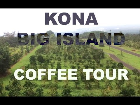 Hawaii Coffee Tour You Don