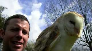 Feeding a male barn screech owl [HD]