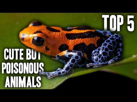 Top 5 Cute But Poisonous Animals