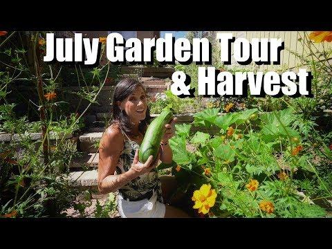 July Garden Tour & Harvest 🍅🥒🌶🍆